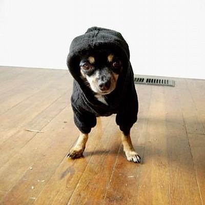 Doggy Doom!