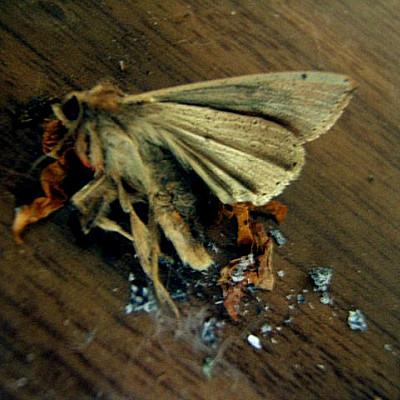 Crashed Like Wretched Moth