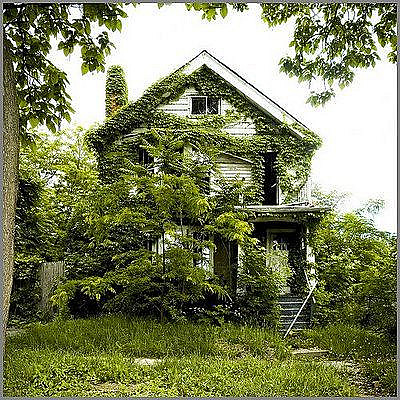 Feral Houses 1
