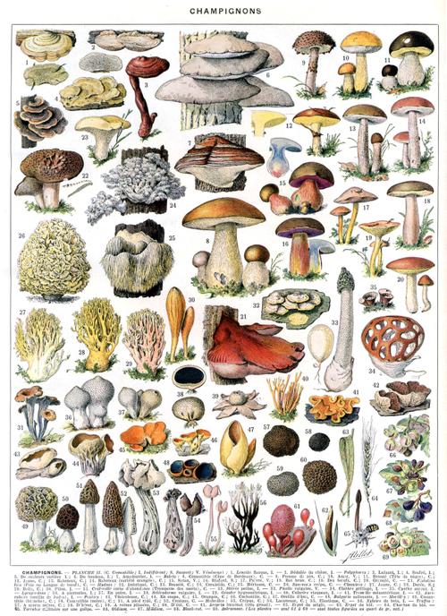 秋 champignons (THX Estelle)