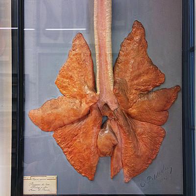 Le musée Fragonard images